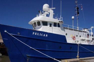 RV-Pelican-1024x680